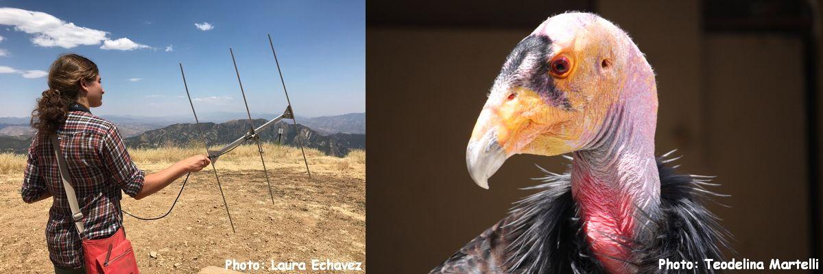 PGM-Condors-Captivity-Banner.jpg