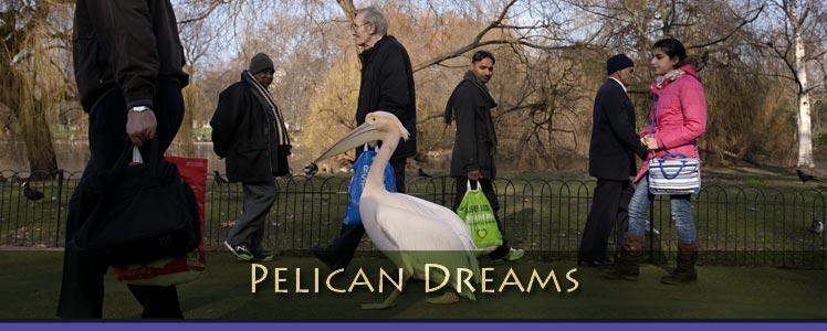 pelican-dreams.jpg